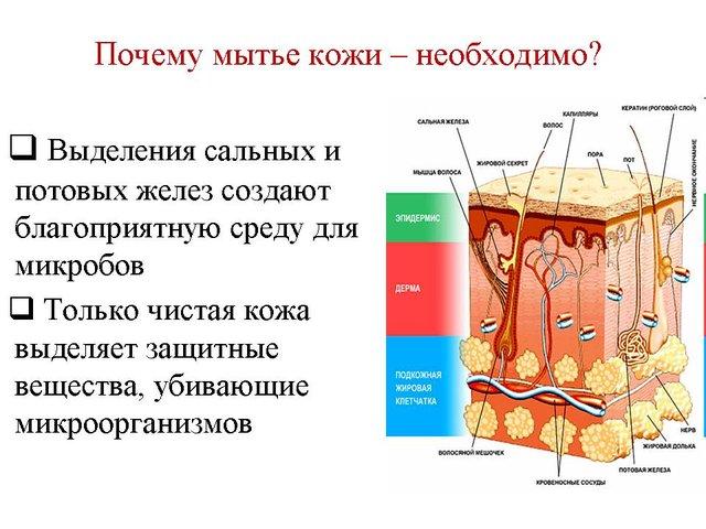 Мыло справляется с загрязнениями за счет содержания в нем щелочи, которая нейтрализует жир и иные загрязнения. Щелочь вступает в реакцию с солями загрязнений, во время химической реакции, мыло меняет поверхностное натяжение воды, образуются отрицательно заряженные ионы, которые отскакивают от очищаемой поверхности.